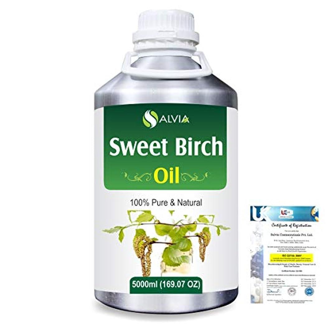 パン屋工業用欠席Sweet Birch (Betula lenta) 100% Natural Pure Essential Oil 5000ml/169fl.oz.