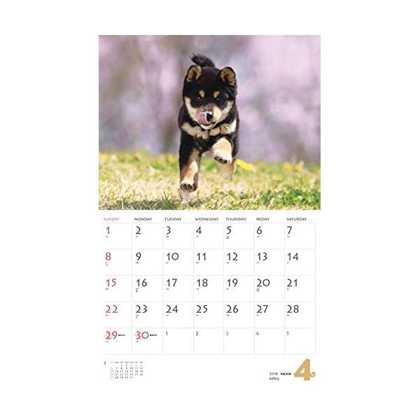 カレンダー2018 柴犬 (ヤマケイカレンダー...の紹介画像6