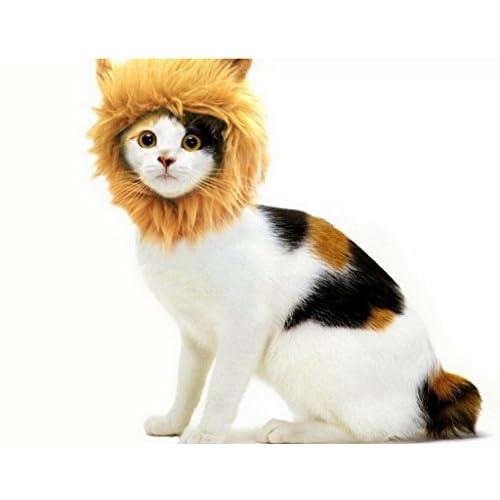 (ビグッド)Bigood 可愛い ペット用 帽子 たてがみ ライオン 変身 猫 キャット うさぎ 防寒 服 犬 ペットコスプレ コスチューム マニアル キャップ オレンジ