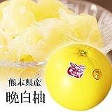 【 熊本県産 】 晩白柚 (ばんぺいゆ) 2L〜Lサイズ (2玉入り (化粧箱))