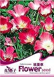 Mikedaoerによってポピーシード50個のカリフォルニアポピー草の種子ホットピンク蕾装飾のA120