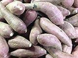 鹿児島県産 西山さんちの酵素紅はるか 小さ目サイズ さつま芋