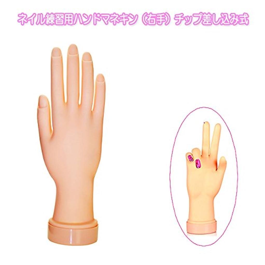 覗く支配的壊すネイル練習用ハンドマネキン(右手)チップ差し込み式