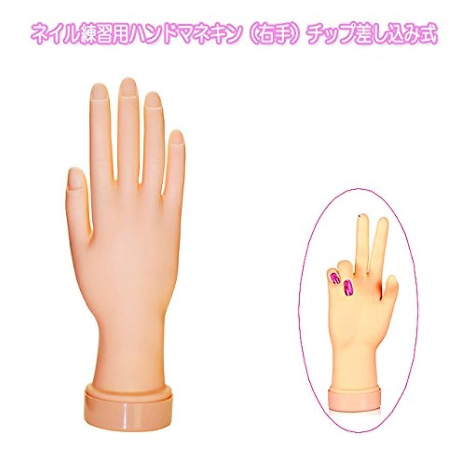 クレデンシャル団結ヒステリックネイル練習用ハンドマネキン(右手)チップ差し込み式