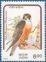 Birds of Prey- Shahin Falcon Bird, Shahin Falcon, Falco peregrinus peregrinator, Indian peregrine falcon, Black shaheen falcon, Black shaheen, Indian shaheen Indian Stamp