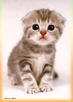 キャラクタースリーブコレクション 第25弾 猫 「スコティッシュ・フォールド」