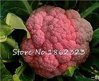 100個パープルブロッコリー盆栽おいしいカリフラワーガーデンパティオ鉢植えの植物盆栽バイオレットブロッコリーフォーシーズンズ植物