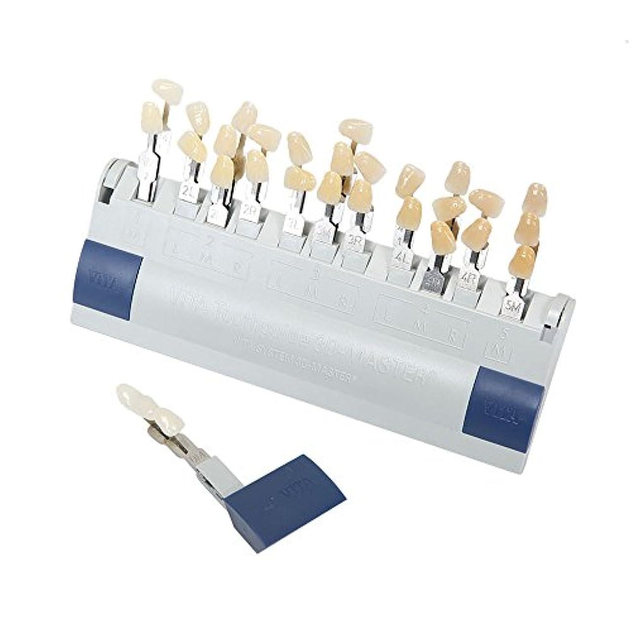外部緩める離れたVITA 歯科ホワイトニング シェードガイド 29色 3D 歯列模型ボード
