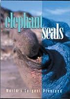 elephant seals: World's Largest Pinniped