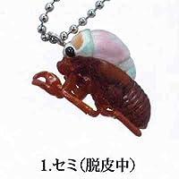 脱皮-蝉 夏の思い出- 1:セミ(脱皮中) バンダイ ガチャポン