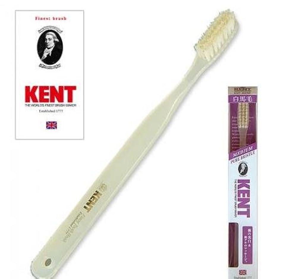 直立振動する指KENT(ケント) 白馬毛歯ブラシ ラージヘッド ふつう 2本セット