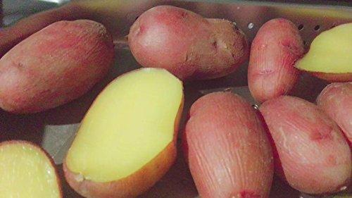 北海道産 じゃがいも レッドムーン 『 種芋 』 1kg M~L サイス