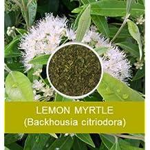 Lemon Myrtle, Loose Leaf Tea, Queen of Lemon Herbs, 1 Pound Bulk Resealable Bag