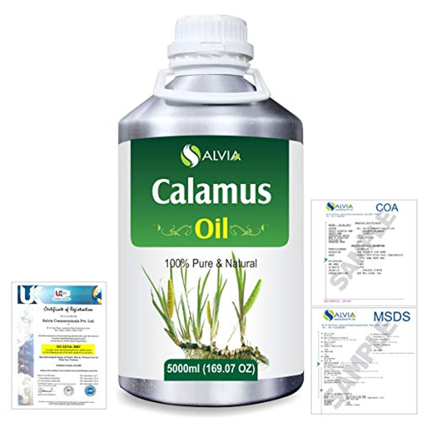 ドラフトルール残基Calamus (Acorus Calamus) 100% Pure Natural Essential Oil 5000ml/169 fl.oz.
