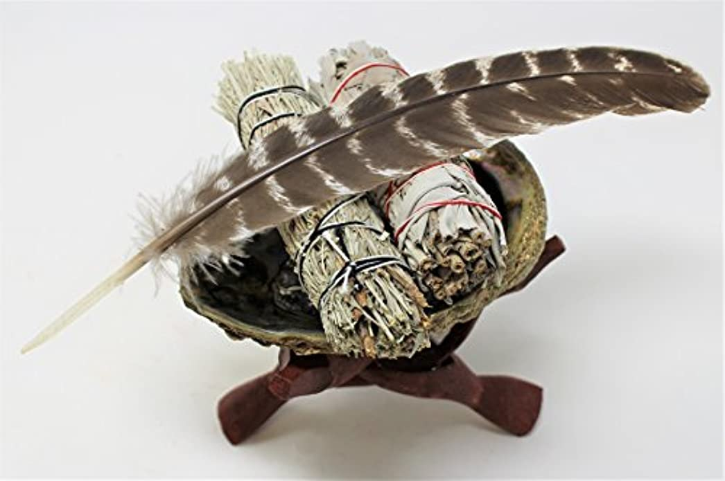 飾り羽スイジェーンオースティンAbalone Shell, 6