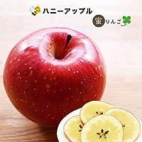 りんご 苗木 ハニーアップル 1年生 接ぎ木 苗 果樹 果樹苗木 リンゴ