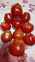 HIGH発芽SEEDSだけでなくPLANTS:トマト黒トリュフ、暗い過去、トマト、生産、希少レア