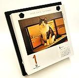 シーオーツー 猫めくり 2020年 カレンダー 日めくり CK-C20-01 画像