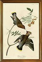 古典フレーム John James Audubon ジクレープリント キャンバス 印刷 複製画 絵画 ポスター(ボヘミアンチャタラー) #JK