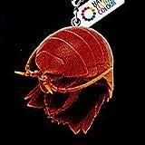 ダイオウグソクムシとオオグソクムシ ボールチェーン&フィギュアマスコット 5:オオグソクムシB(ボールチェーン) いきもん ガチャポン