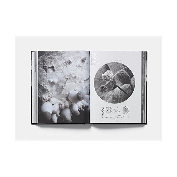 Studio Olafur Eliasson:...の紹介画像4