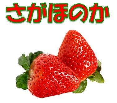 鹿児島県産(九州産)さがほのか 1箱:4パック入り いちご イチゴ