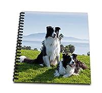 Danita Delimont–犬–2ボーダーコリー犬–us05zmu0093–Zandria Muench Beraldo–Drawing Book 4x4 notepad db_88785_3