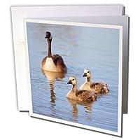 3droseグリーティングカード、サンディエゴ、LakesideカナダGoslings。カリフォルニアGC _ 205993_ 1)