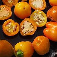 PLAT会社-SEEDS植物の世界の種子 - ミニベル(オレンジ)種子