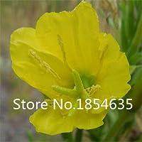 イエロー:プロモーション!100イブニングプリムローズ種子9種類の色花の種高品質diyガレン多年生咲く植物花