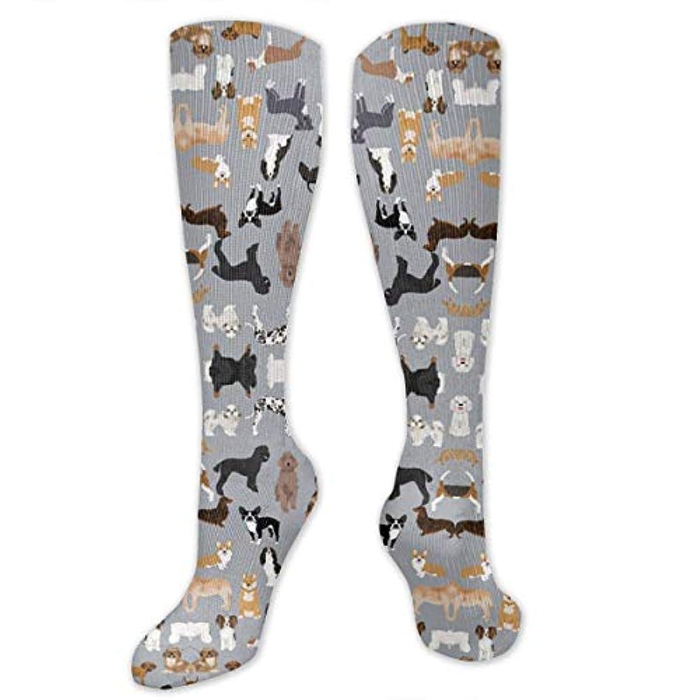 途方もない待つご意見靴下,ストッキング,野生のジョーカー,実際,秋の本質,冬必須,サマーウェア&RBXAA Dogs Grey Cute Dog Socks Women's Winter Cotton Long Tube Socks Cotton...