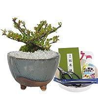 盆栽 実 なる 紫檀 道具 セット 初心者 可愛い フラワー お祝い プレゼント ギフト 誕生日