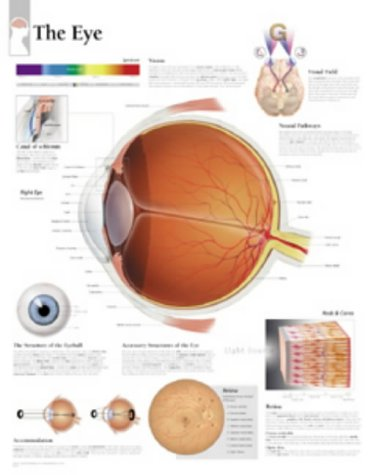 Download The Eye, Paper Chart 1930633580