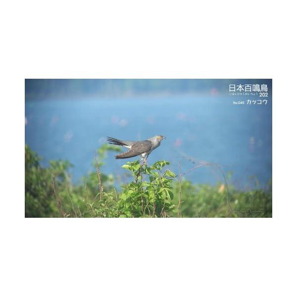 シンフォレストBlu-ray 日本百鳴鳥 20...の紹介画像9