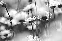 一輪の花、フヨウ キャンバスの 写真 ポスター 印刷 植物・花 (50cmx33cm)