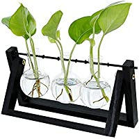 feelingood Hydroponic Glass Planter Bulb Vase with Wooden Stand Tray Tabletop Desk Decor