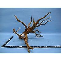 天然枝流木(アク抜き処理済) P24