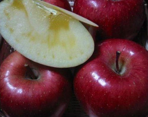 りんご サンふじ 大玉10kg 自家用(18から28玉) 信州産 長野サンふじりんご