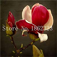 Virtue 5 pcs/Bag Magnolia Flowers Bonsai, Beautiful Magnolia Tree, Easy Grow for Home Garden DIY Ornamental Plant: 19