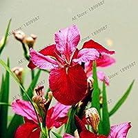 17:50個/袋種子、家庭菜園の種まきのための盆栽種子erflyの花の種、17を成長させることは容易