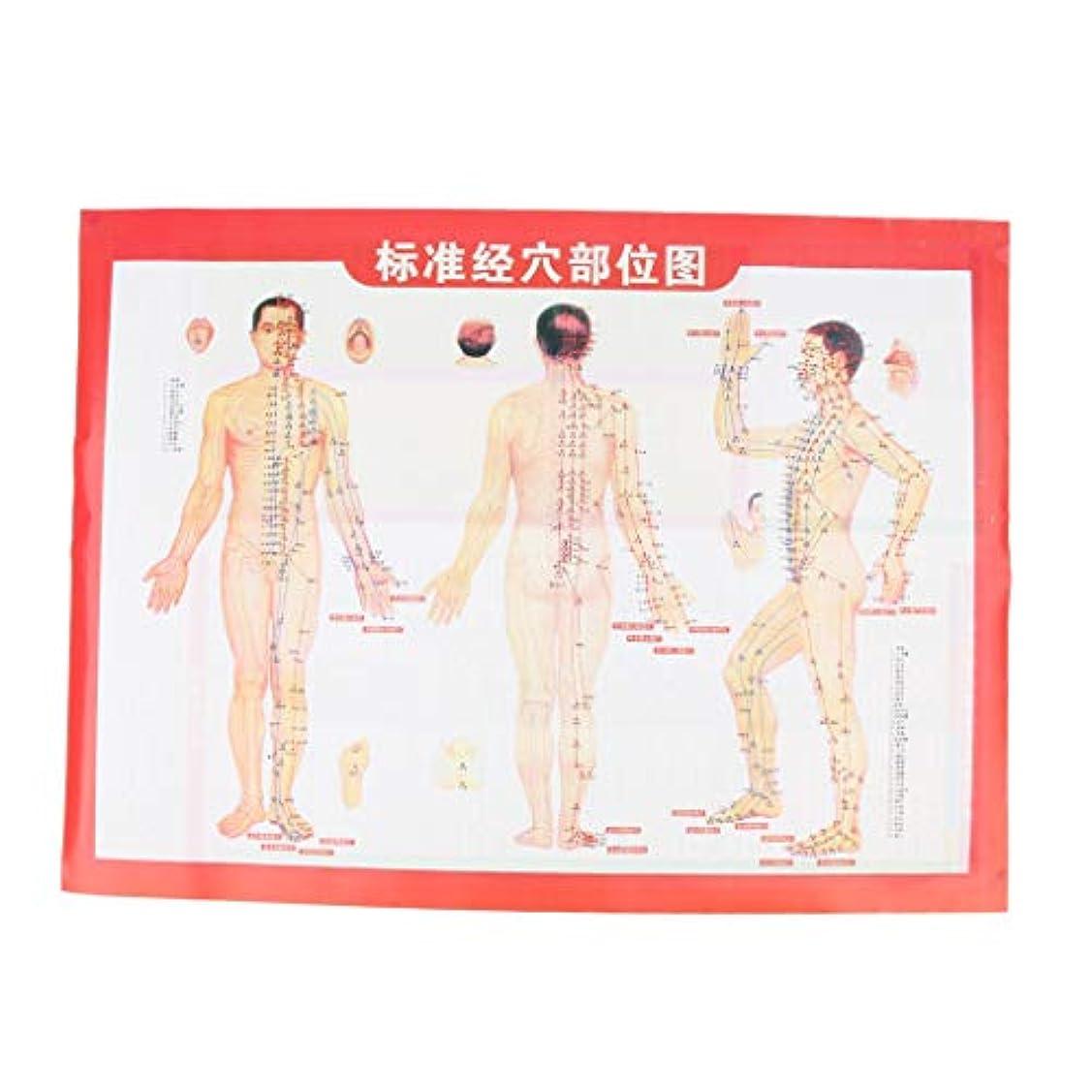 不適切な複合延ばすIPOTCH 鍼灸 経絡 経穴図  ポスター  マッサージ ポイントチャート 約52x39cm