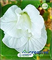 ガーデンキッチンガーデン種子20Indoor、屋外キッチンガーデン種子の種(パケット当たり20)のためのシードベル種子