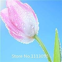 5:ガーデンホット販売500ピースチューリップ電球種子(ミックスランダムカラー)盆栽フラワーシードdiyホームガーデン用クリスマス