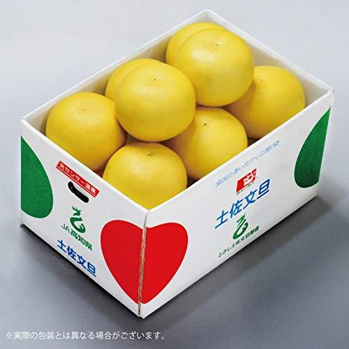 土佐文旦 高知県産 JA高知市 秀品 2L〜Lサイズ 約5kg