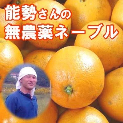 無農薬ネーブル 5kg 有機柑橘 能勢さんの ネーブルオレンジ