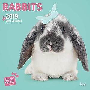 RABBITS BY STUDIO P 2019 SQUARE WALL CAL