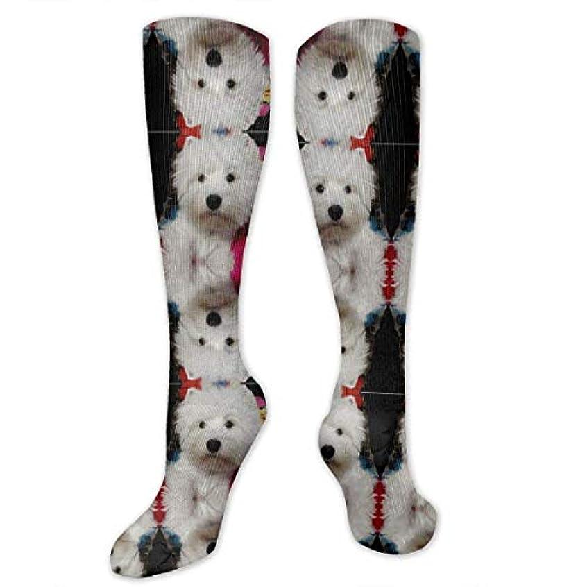 豊富な微生物シンプトン靴下,ストッキング,野生のジョーカー,実際,秋の本質,冬必須,サマーウェア&RBXAA Model Westie Socks Women's Winter Cotton Long Tube Socks Cotton Solid...