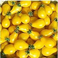 SEEDS:ホームガーデン用500枚マルチカラーフレッシュトマトジューシーな植物有機非GMOおいしいフルーツ野菜プランタ/ Planteを:100個-4