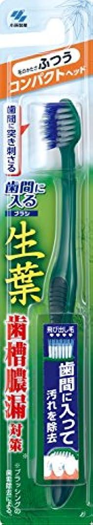 難しい突破口最も生葉(しょうよう)歯間に入るブラシ 歯ブラシ コンパクト ふつう