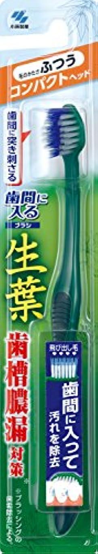 約設定ヒューム接地生葉(しょうよう)歯間に入るブラシ 歯ブラシ コンパクト ふつう